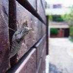 壁面で蛹になったナミアゲハ 福岡県福岡市中央区赤坂 2013/08/13