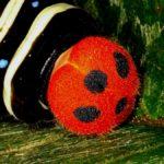 テントウムシ(有毒で鳥が捕食しない)に擬態するアオバセセリ幼虫 福岡県福岡市早良区板屋 2006/07/28