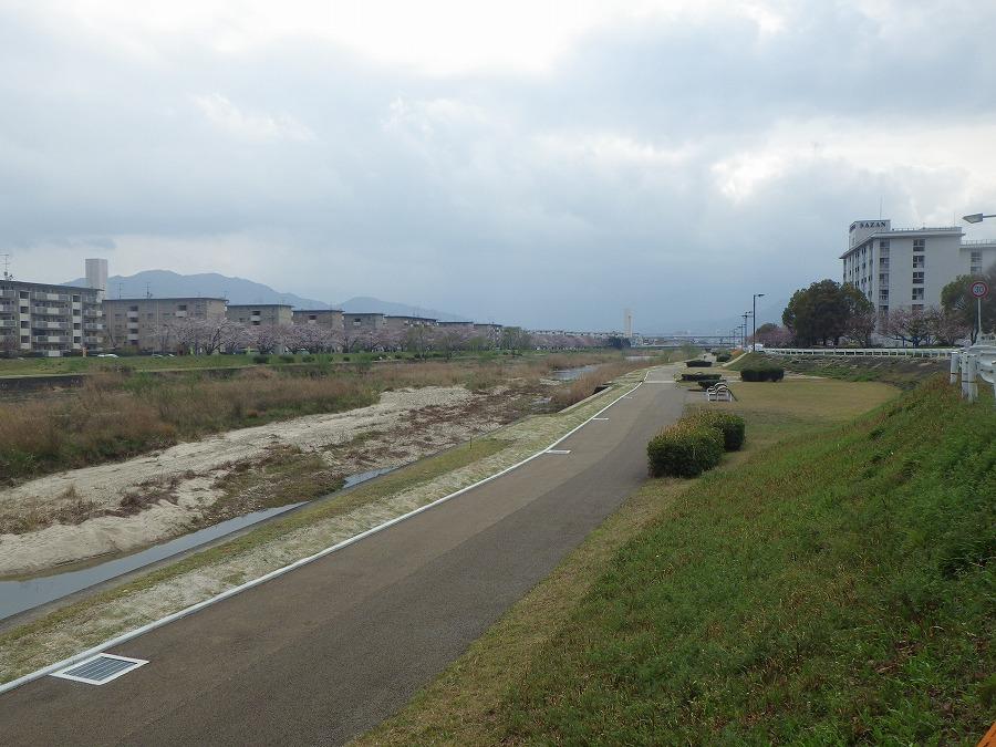 室見川河畔公園のサイクリングロード-01