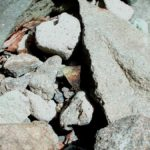 地面にとまるコツバメ 福岡県八女郡矢部村釈迦岳 2002/04/09