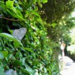 植物にとまるサツマシジミ 福岡県福岡市中央区赤坂公園 2011/07/05