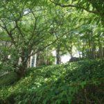 九州産業大学 図書館-2号館周辺緑化-03