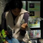 化粧の匂いに誘引されたオオゴマダラ 兵庫県伊丹市伊丹市昆虫館 2009/03/14